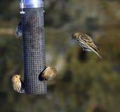 鸟繁忙的馈电线 库存图片