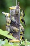 鸟繁忙的馈电线 免版税库存照片
