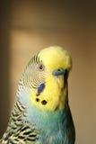 鸟纵向 免版税库存照片
