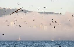 鸟群在前有雾的城市地平线的 库存图片