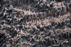 鸟群在北极 免版税库存照片
