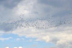 鸟群在天空的 免版税库存图片