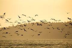 鸟群在晚上点燃 免版税库存图片