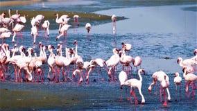 鸟群在河的 库存图片