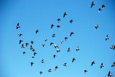 鸟群在蓝天的 库存照片