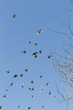 鸟群在蓝色的没有云彩 免版税库存图片