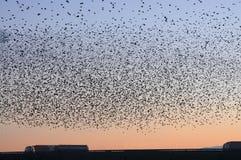 鸟群在高速公路的 图库摄影