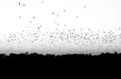鸟群在黑白的 库存图片