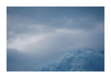 鸟群飞行在超现实的阿拉斯加山 免版税库存照片