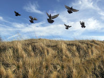 鸟群 图库摄影