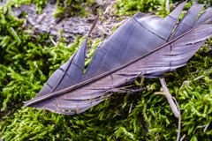 鸟羽毛,困住在树吠声  轻量级概念 库存照片
