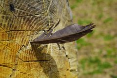 鸟羽毛,困住在树吠声  轻量级概念 免版税库存图片