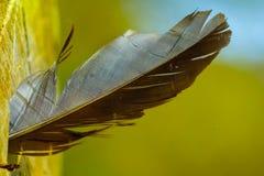 鸟羽毛,困住在树吠声  轻量级概念 免版税图库摄影