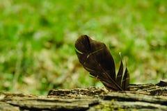 鸟羽毛,困住在树吠声  轻量级概念 图库摄影
