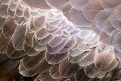 鸟羽毛 免版税图库摄影