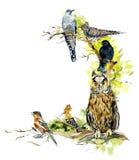 鸟背景,框架 与野生生物场面的装饰 手拉的水彩例证 免版税库存照片