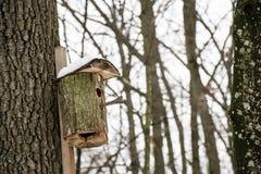 鸟舍在冬天森林里 免版税图库摄影