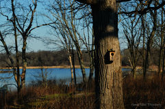 鸟舍在森林里 免版税库存图片