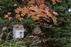 鸟舍外面在垂悬在树的秋天 免版税库存图片