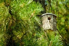 鸟舍由杉木制成 免版税库存照片