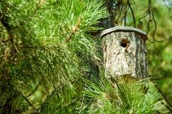 鸟舍由杉木制成 库存照片