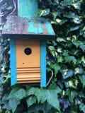 鸟舍蓝色橙色绿色常春藤背景油漆削皮家栖所鸟房子活活空的巢自然纹理留给愉快 库存图片