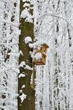鸟舍,保护免受鸟的冷和恶劣天气 免版税库存图片