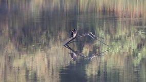 鸟舍 河边区地方公园,索诺马酒乡,加利福尼亚 影视素材