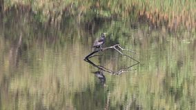 鸟舍 河边区地方公园,索诺马酒乡,加利福尼亚 股票视频
