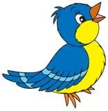 鸟蓝色 皇族释放例证