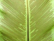 鸟蕨叶子嵌套s 库存照片