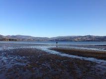 鸟蛤采摘的美丽的海湾 免版税库存图片