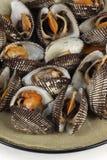 鸟蛤 免版税库存照片