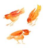 鸟设置了水彩 图库摄影