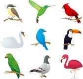 鸟设置了1 库存例证