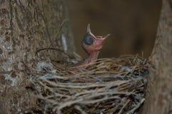 鸟起源 免版税图库摄影