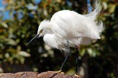 鸟起重机白色 库存图片