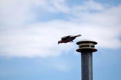 鸟起飞 免版税图库摄影