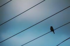 鸟释放喜欢 免版税库存图片