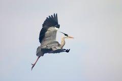 鸟释放天空 免版税图库摄影