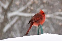 鸟雪 免版税图库摄影