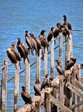 鸟靠码头老 免版税库存图片