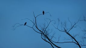 鸟飞行分支