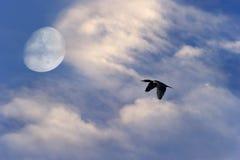 鸟飞行剪影月亮 库存图片