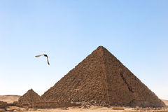 鸟飞行吉萨棉金字塔 免版税库存照片