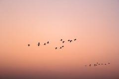 鸟飞行在样式的- 3 免版税库存照片