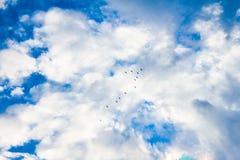 鸟飞行在蓝天的楔子与白色云彩 免版税库存照片