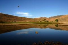 鸟飞行在黄玉的湖 免版税库存照片