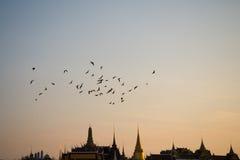 鸟飞行在黎明 库存图片