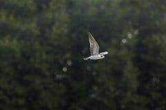 鸟飞行好地产的lanscape 免版税库存图片